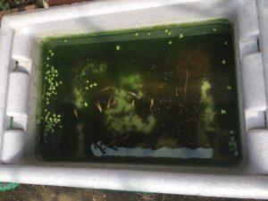 メダカ飼育水槽
