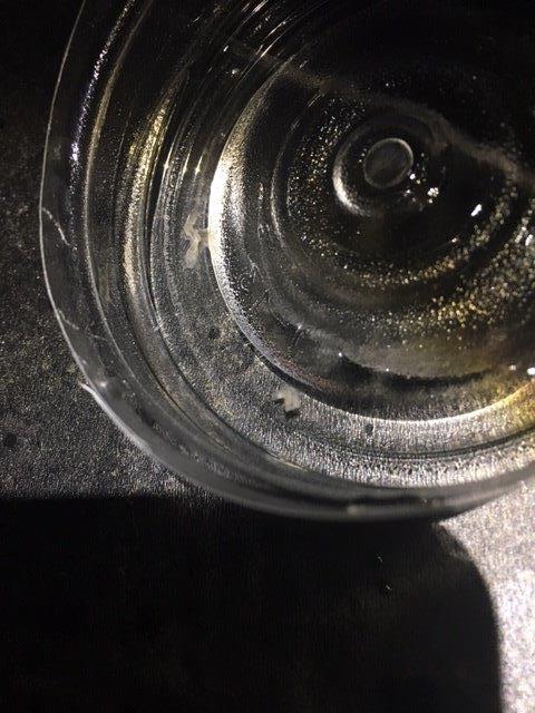 アンモニア水投滴5分後の白いプラナリア