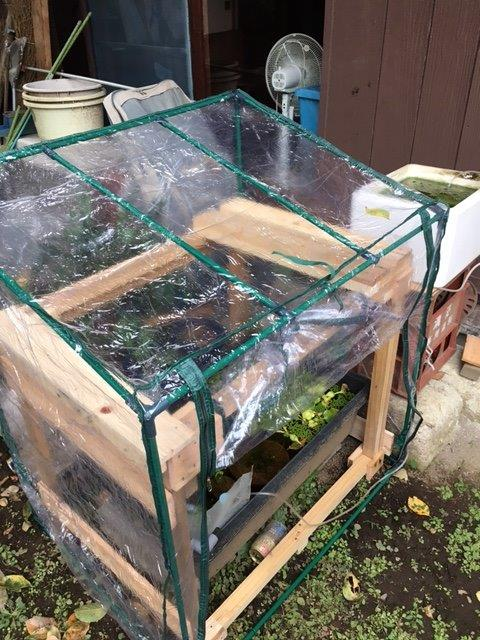 メダカ飼育用棚と温室