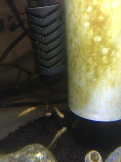 濾過器とヒーター