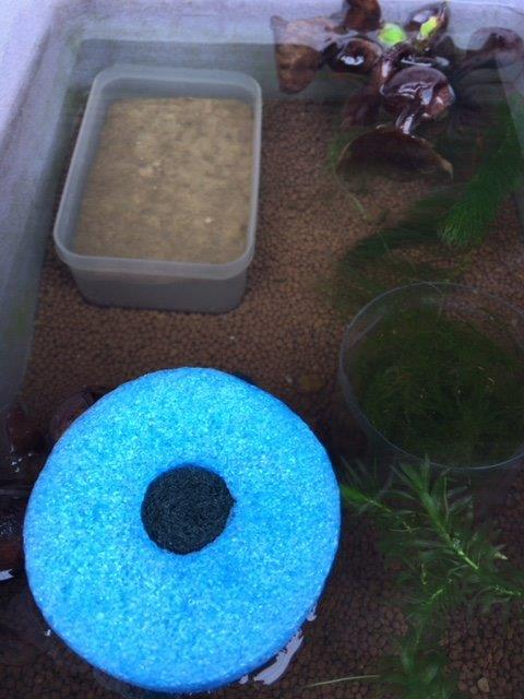 楊貴妃用の水槽