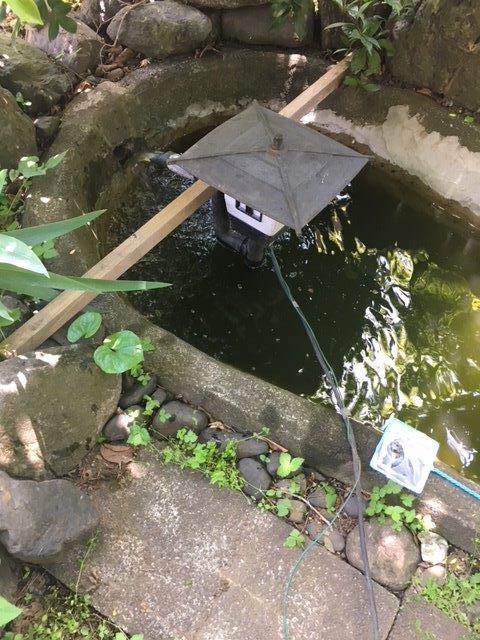 池の水を抜いている